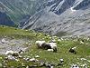 Zugspitzlauf Extremberglauf - Strecke 2011 (53088)