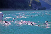 Triathlon Alpe d'Huez - Best of 2013 (77527)