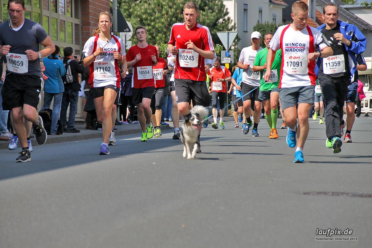 Paderborner Osterlauf 10km 2014 Foto (22)